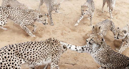 Harnas – Wildlife Rescue Camp