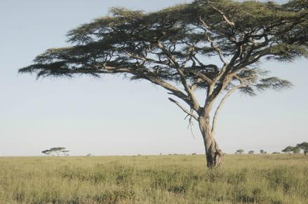Terra Mater Tree