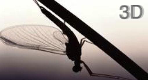 Big Bugs in 3D