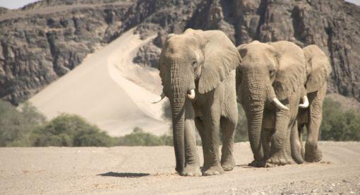 Namibia's Desert Kingdom