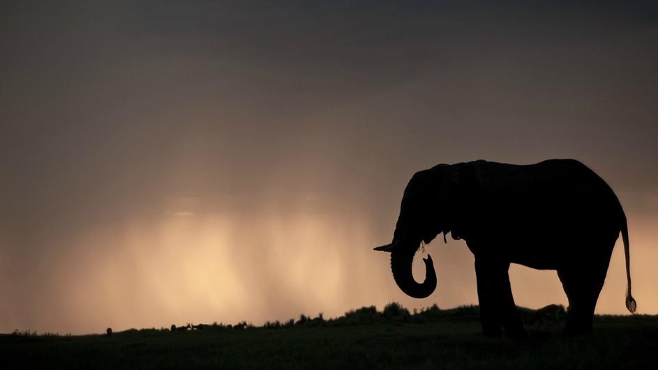 Top Soul of the Elephant - Terra Mater Factual Studios SC73