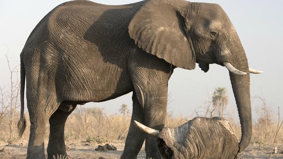 Super Soul of the Elephant - Terra Mater Factual Studios VD41