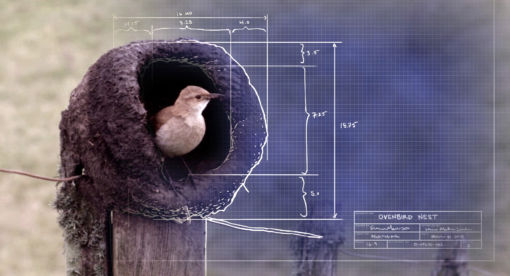 Animal Homes – Natural Born Engineers