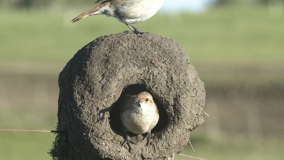 Animals That Build Their Homes