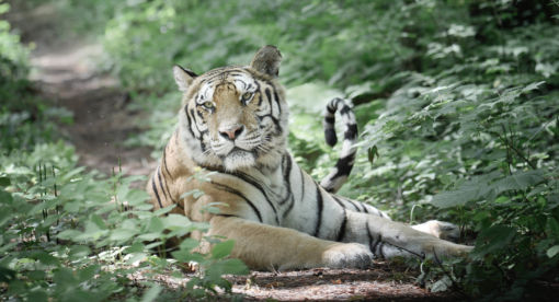 Amur – Asia's Amazon