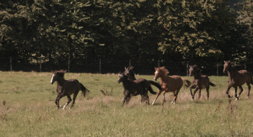 Back from the Brink – Saving the King's Horses