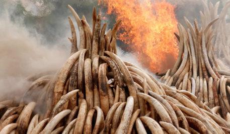 The Ivory Game_Anita Ladkani