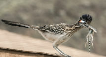 Roadrunner … eat my Dust!