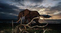 Gabon – Africa's forgotten Paradise