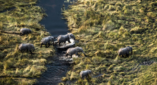 Okavango – River of Dreams