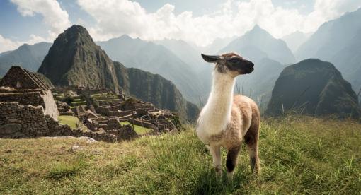 Wild Peru – Land of Extremes