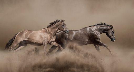 Horse Power – American Legacies