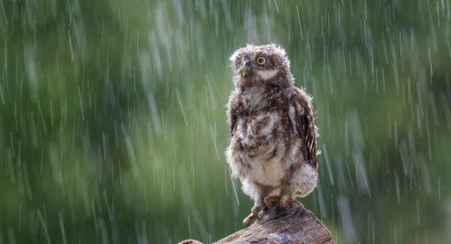 The Storm – Wildlife in Wild Weather